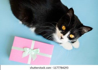 Festive holiday New Year and Christmas blue background with gift box, black and white cat. Concept of carnival, birthday, party. Flat lay. Top view