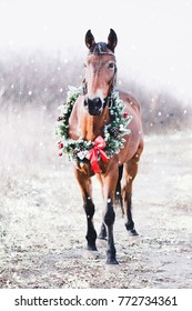 A festive horse in a christmas wreath