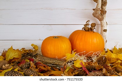 Festive still life with pumpkins on straw on wooden wall background for Thanksgiving. Decoration for house interior. Empty place for text. Copy space.