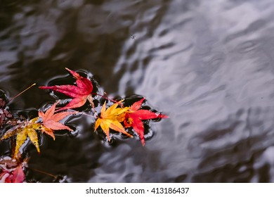 Few autumn maple leaves float on the water pond.