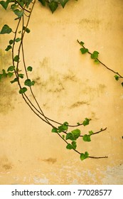 A few branches of green ivy swirl gracefully on an ancient yellow wall in Italy.  Room for copy.