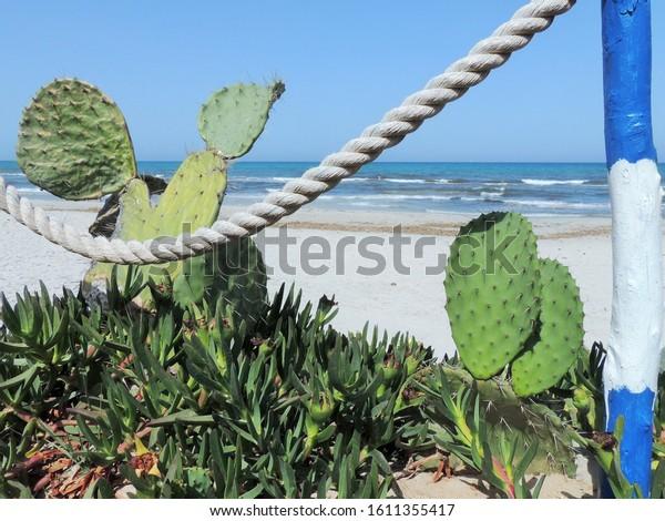 a few cactus plants on the beach