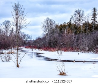 A few Canda geese relax on the ice at the edge of a small creek in  Peterborough, Ontario, Canada as the ice starts to melt in the spring.