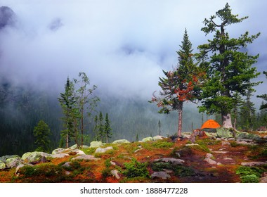Few cedar pines, stones, moss and bright orange tent on the mountain slope at the background of wild coniferous forest and fog in Ergaki national park, Sayan, Krasnoyarsk region, Siberia, Russia