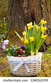 a few colorful flowers in a basket in front of an old tree standing in the garden - eastern