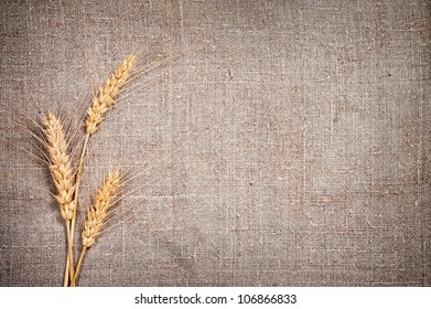 Few ears of wheat on sacking fabric. Harvest