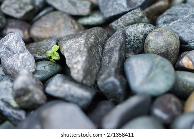 A few leaves from a small green plant growing and pushing through big heavy black rocks.