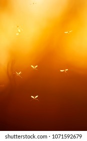 a few small insects mosquitoes with transparent wings flying against the bright red of the sunset sky