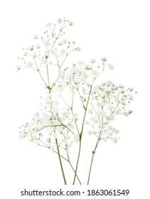 Wenige Zweige mit kleinen weißen Blumen von Gypsophila (Baby-Atem) einzeln auf weißem Hintergrund.