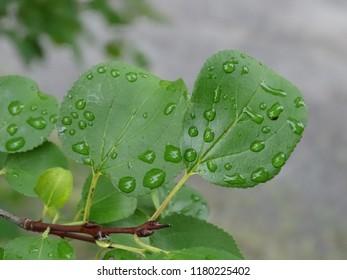 a few wet leaves