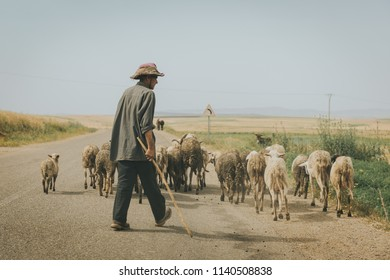 FEZ, MOROCCO - MAY 16, 2018:  unidentified shepherd bring his herd along a road to the field in Morocco