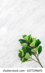 Ficus tree branch on marble background, with copy space on top.