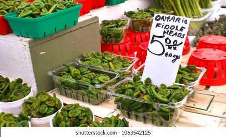 Fiddle Head in Ontario Market