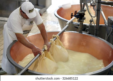 FIDENZA, ITALY - 11 SEPTEMBER 2014: A master cheesemaker wraps curds from a vat during the Parmigiano-Reggiano cheese manufacturing process at a cheese factory.