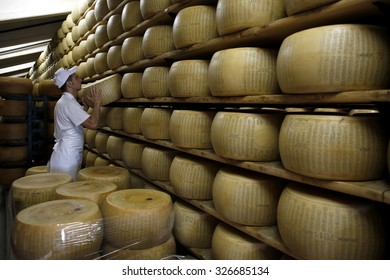 FIDENZA, ITALY - 11 SEPTEMBER 2014: A worker selects a whole Parmigiano-Reggiano cheese from a storage rack ahead of inspection at a cheese factory.