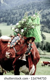 FIEBERBRUNN, AUSTRIA - SEPT 15: Traditional Almabtrieb. Decorated cow at ceremonial driving down of cattle from the mountain into valley in autumn in Fieberbrunn, Tirol, Austria on September 15, 2012.