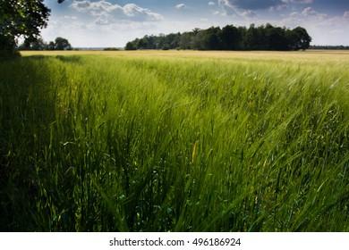 Field - Shutterstock ID 496186924