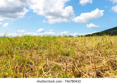 field after harvest with blue sky