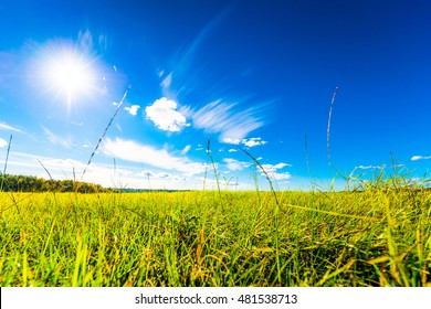 In the field among the grass on a background of blue sky with clouds and sun. Close up view from the level of the grass
