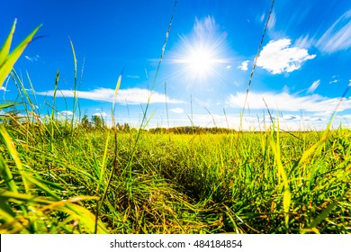 In the field among the grass on a background of blue sky with clouds and sun. Close up view from the level of the ground, focus on the grass