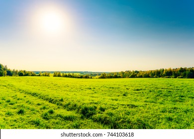 Field in the autumn forest in the sunlight against the blue sky. Image in the yellow-blue toning