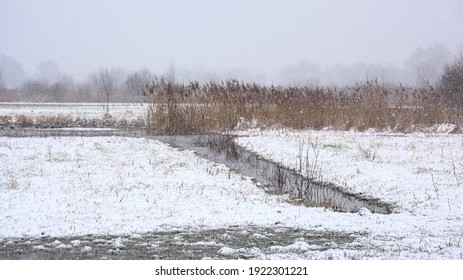 Field with bare trees and reed in a snow covered winter marsh landscape in Bourgoyen nature reserve, Ghent, Flanders, Belgium