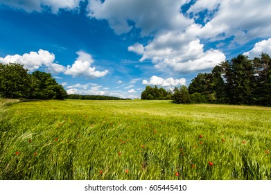 Field of Barley with corn poppy under a blue-white Sky in Bavaria