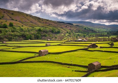 Field Barns at Gunnerside / Swaledale in Yorkshire Dales National Park winds into the northern Pennines. It is famous for its meadows, field barns and drystone walls.