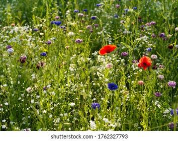 Field of beautiful wild summer flowers makes me feel good