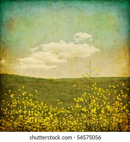 A field of black mustard plants with an aged, vintage look.