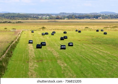 Field of black plastic wrapped bales of silage