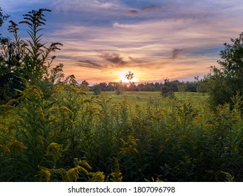 Field of blossoming goldenrods at sunset