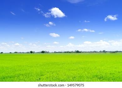 Field  in blue sky  on summer .