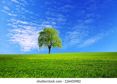 field and blue sky in spring