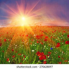 Field with bright blooming poppies in Ukraine, of Europe, very beautiful natural phenomenon in the early leta.Eto favorite subject for painters, artists, photographers, working on his background.