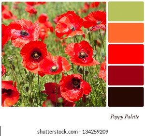 A field of bright red flowering poppies in a colour palette with complimentary colour swatches.