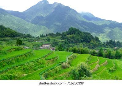 A field of Cloud terrace in Yunhe County Lishui city zhejiang province china.
