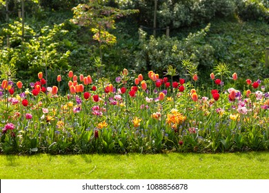 Field with colorful Dutch tulips in the Keukenhof, Lisse