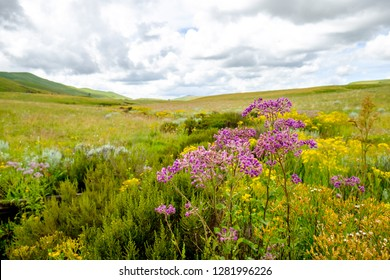 Field of colorful flowers with dramatic clouds