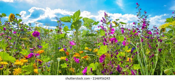 Field with colorful flowers in summertime