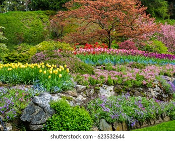 Field of colorful tulips in the spring garden