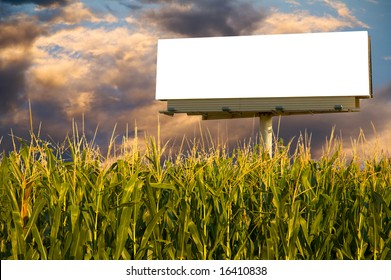 Field of Corn and a billboard in the early evening sun - the golden hour.