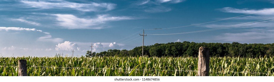 Field with Corn and Wires with Bird Flock
