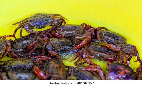 field crabs in yellow bucket