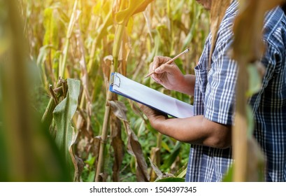 In the field crop records of maize fields, people attach great importance to and trust in the application of modern agricultural production technology.