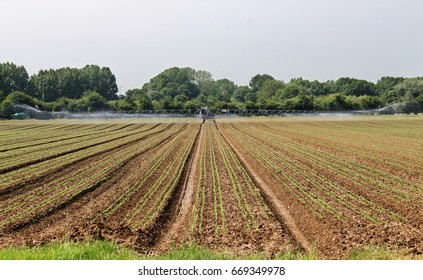 Field of Crops being watered with an irrigation machine