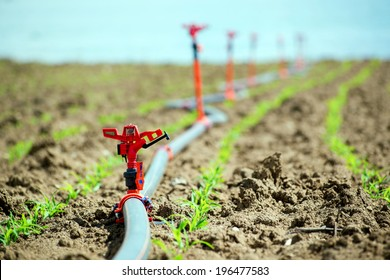 Field crops and irrigation system.. Agricultural irrigation equipment