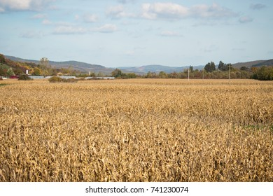 Field of crops on a bright day
