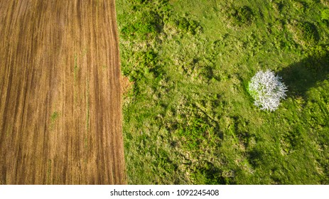 a field of cultivated land in aerial view, in the middle of green nature with a blossoming tree in white