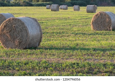 a field with cut grass, the grass is rolled up in bales, feeding cows, harvesting animal feed